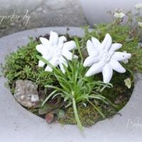 Alpengarten_Betonedelweiss