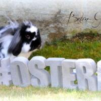 Betonbuchstaben #OSTERN mit Felix
