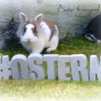 Betonbuchstaben #OSTERN mit Filou