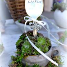 Betontasse mit Silberlöffel Garten und Sukulenten