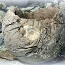 Betonkugel mit Amonit