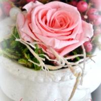 Rose im Betontopf